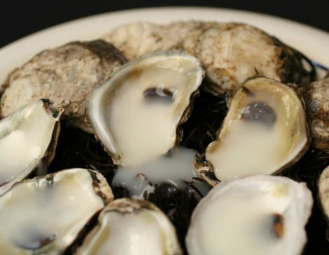 Oysters Sperm