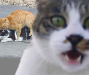 photobombcat