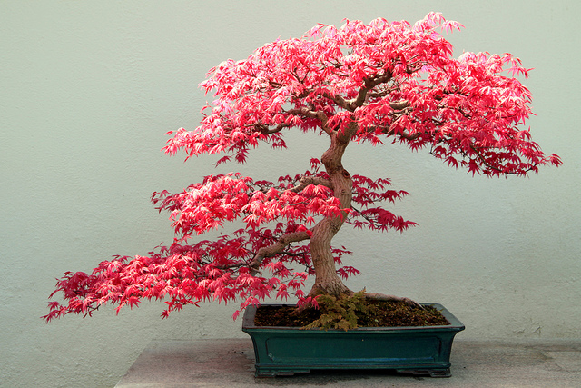 Bonsai Fukinagashi